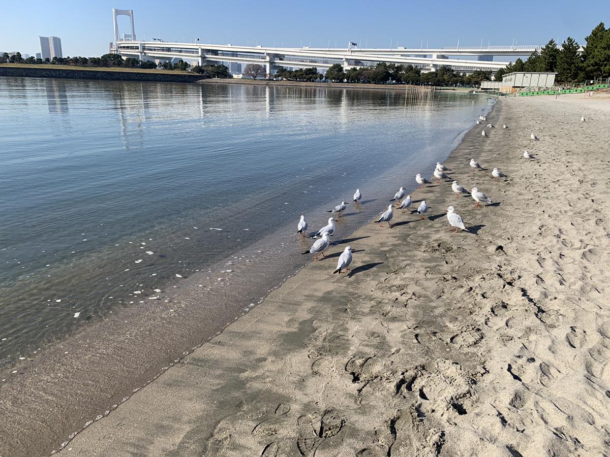 お台場海浜公園の清掃を実施いたしました